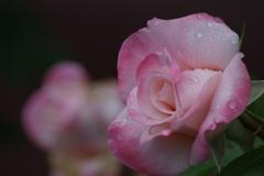六月の薔薇-エイプリルインパリ