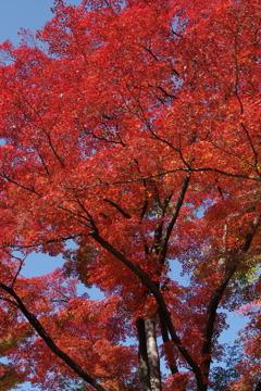 もみじ公園の秋色-5