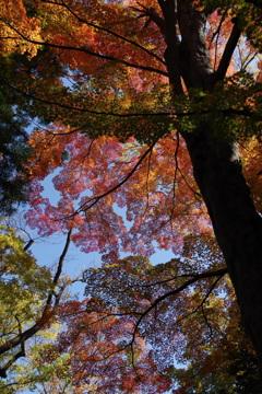 もみじ公園の秋色-3