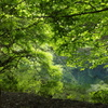 緑に包まれて-丸池様3