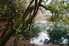 秋彩の丸池様-5
