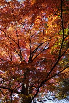 もみじ公園の秋色-4