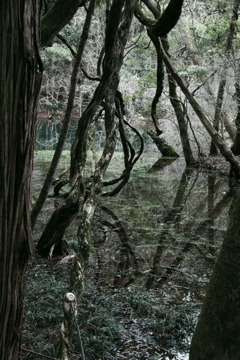 雪のない真冬の丸池様-5