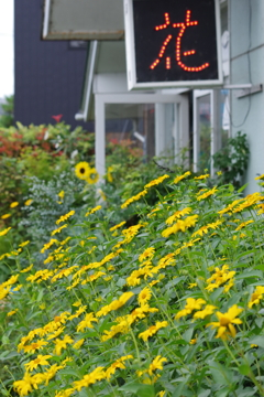 花散歩-住宅街の花屋さん
