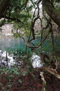 雪のない真冬の丸池様-4