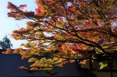 羽黒山-出羽の里門前庭園2