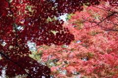 もみじ公園の秋色-2