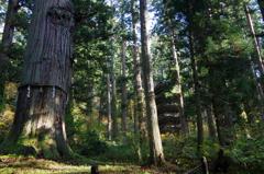 爺杉と国宝五重の塔