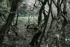 神の池‐丸池様10