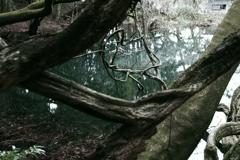 神の池‐丸池様4