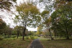 少し秋色の野草園