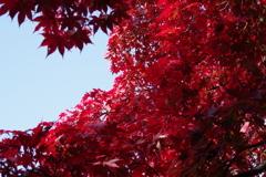 もみじ公園の秋色-1