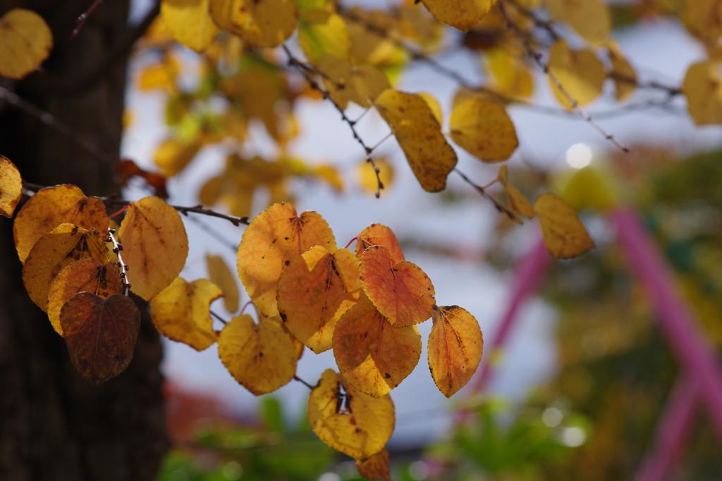 花散歩-色づく