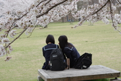 桜の下で。。