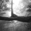Branching point