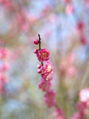 春の鼓動Ⅹ