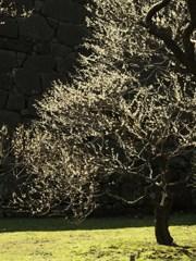 春の雅 Ⅰ