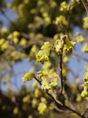 春は黄々に染まりにけり