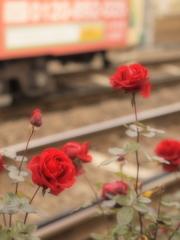 薔薇ノ軌道