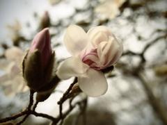 春の目覚め