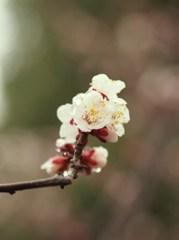 春の雫ⅩⅤ