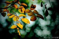 秋の影絵Ⅱ