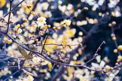 春のたまご