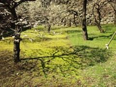 春の雅 Ⅳ