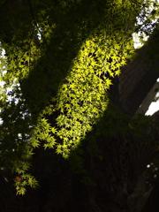 光と影の秋