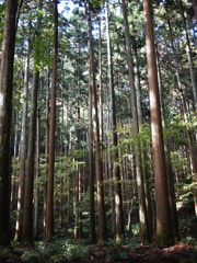 京都補完計画 其ノ弐