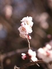 春の鼓動Ⅳ