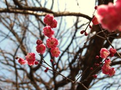 春の心模様Ⅴ