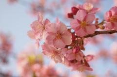 春の和らぎ