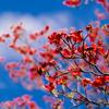 いつかの春