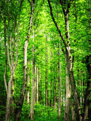 森ゆきのススメ