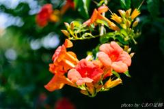 夏のベルビア
