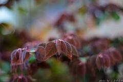 葉葉葉は葉は葉