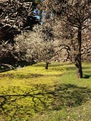 春の雅 Ⅲ