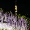 紫の降る夜