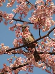 春の端正Ⅰ