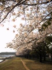 思い出の春