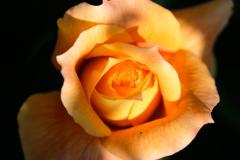 綺麗な花には・・・