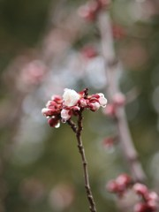 春の雫ⅩⅥ