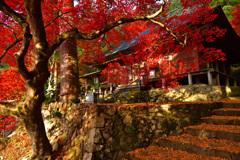 紅楓と落黄葉