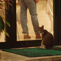 ドア前の猫
