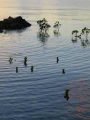 名蔵湾の海面