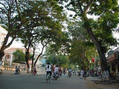 MyThoの街路樹