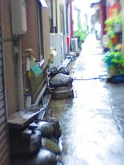 小路端の石