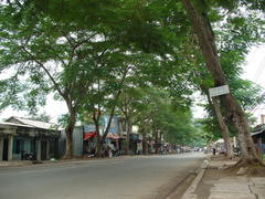 My Tho市の立派な街路樹