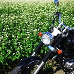 蕎麦の花 & HONDA Phanom200